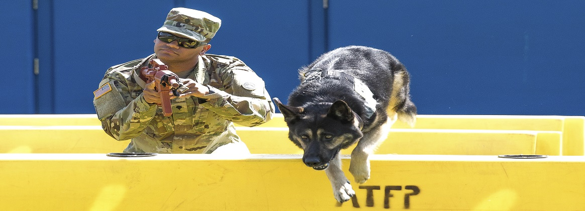 Buzo, an Army working dog, jumps a barricade during the 2019 National Police Week Top Dog competition at Yokota Air Base, Japan, May 24, 2019. Airmen, soldiers, sailors and Japan Air Self-Defense Force service members took part in the event.